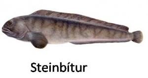Hjallaþurrkaður harðfiskur (Steinbitur) í Örkina